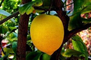 Vitamin C-reiche Ernährung und Sport schützen vor Grauem Star