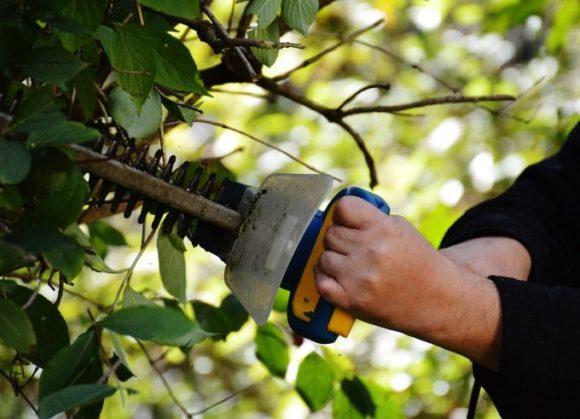 Gartenarbeit wie Hecke scheren kann ins Auge gehen - besser mit Schutzbrille