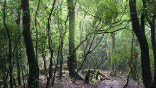 We Forest - Partner Esprit - Project India Khasi Hills