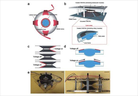 Kontaktlinsen mit Zoom - Universität California San Diego