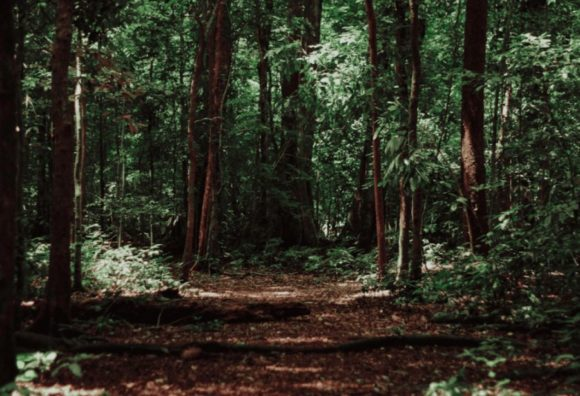 Lenstore - Sehen - 6 Wald original