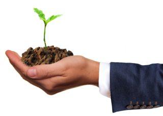 Hoffnung - Erholung - junge Pflanze