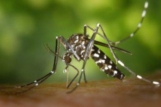 Augen - Neue Infektionen in D - Tigermuecke - Pixabay WikiImages