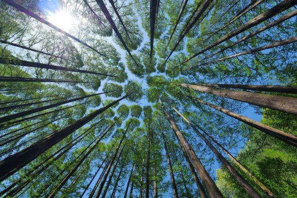 Nachhaltigkeit - Am Anfang der Wald