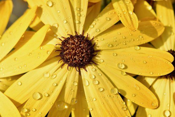 Blume Sonnengelb Hoffnung - Farbe 2021