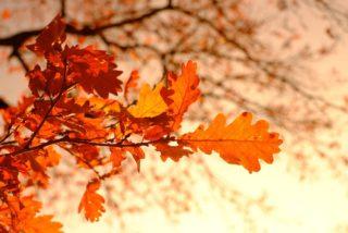 Herbst Blätter Wald