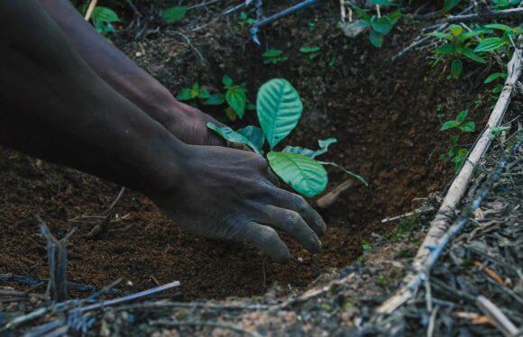 Marcolin, Timberland und Treedom pflanzen Bäume