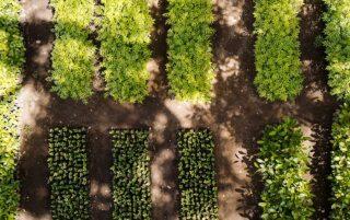 Treedom - Internetplattform zur Förderung der Pflanzung für Bäume und Wälder